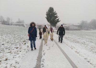 FG_Alpakawanderung10